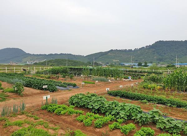 지원엠텍 주말농장