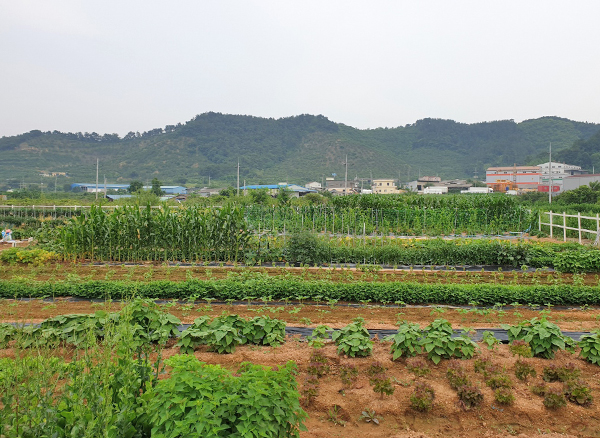 Weekend Farm